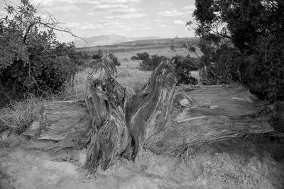 Log, White Mesa, New Mexico, fine art, black and white image, Adventure Photography Workshop, Michael Clark, SantaFe Workshops, Sandia Peak, Albuquerque