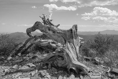 Sugarloaf Mountain, Boulder, Colorado, Dead Log, Fine Art Landscape, fine art (metalic) print, PlexiPlaq, Limited Edition, individually numbered, signed. ​