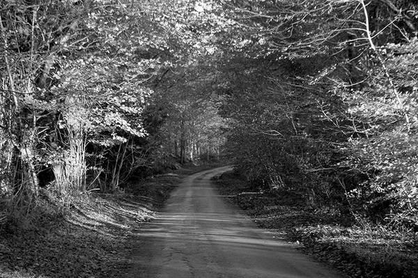 Country Lane, Somerset
