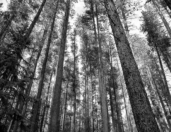Granduer, Ceran St Vrain Trail