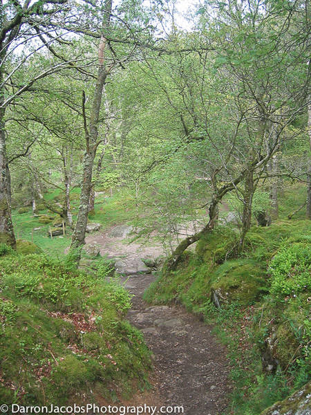 Greator Rocks Valley, Dartmoor