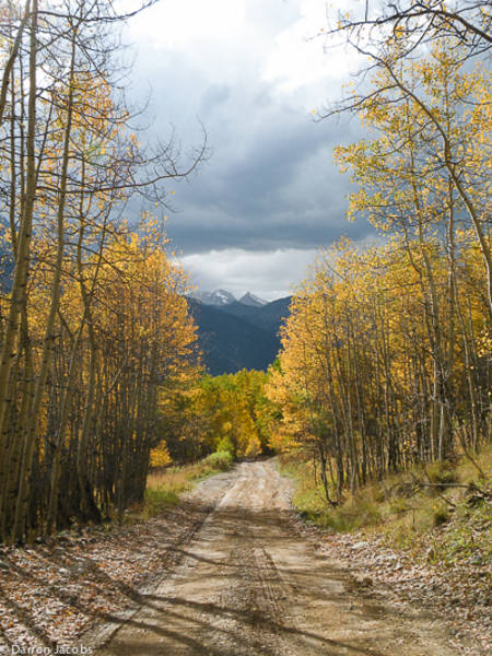 Storm Clouds Looming Over Autumn Aspens