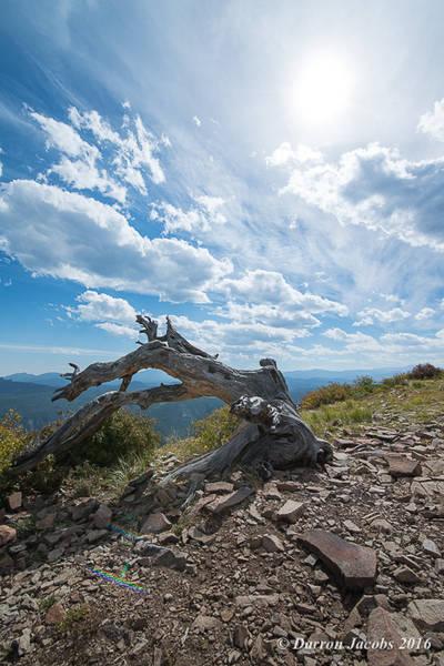 Sugarloaf Mountain, Boulder. Colorado, Sunburst, Dead Log Fine Art