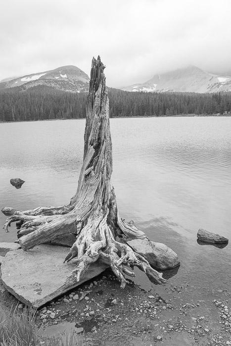 Lakeside, Dead Tree, Brainard Lake, Indian peaks Wilderness Area, Colorado,, photo