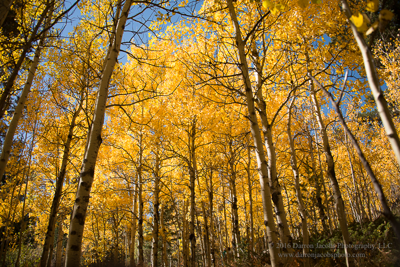 Colorado, Autumn, Aspens, Splendor, Peak to Peak Highway, Nederland, Colorado, photo